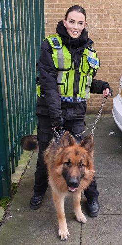 dog-security